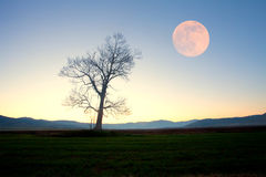 Full moon over alone tree Royalty Free Stock Images