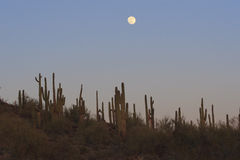 Full moon over desert Stock Photos