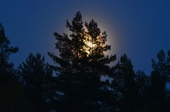Full moon over the forest, South Bohemia Stock Images
