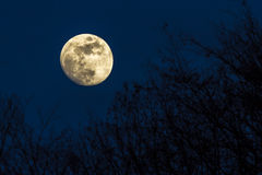 Full moon over a forest Royalty Free Stock Photos