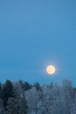 Full moon over frost covered forest Stock Photography