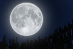 Full moon over mountain. Full moon rising above conifer trees against clear sky Stock Photography