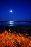 Full moon over Newport Beach. A full moon over Newport Beach Oregon with a tall sea grass in the forground Stock Photos