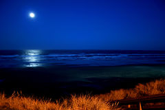 Full moon over Newport Beach. A full moon over Newport Beach Oregon with a tall sea grass in the foreground Stock Photo