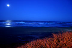 Full moon over Newport Beach. A full moon over Newport Beach Oregon with a tall sea grass in the foreground Royalty Free Stock Photo