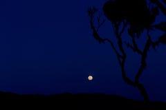 Full moon over ruwenzori mountains Stock Images