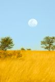 Full moon over the savannah Royalty Free Stock Photo