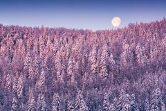 Full moon over the snowy winter forest Stock Photography
