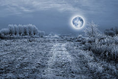 Full moon over the trees covered by hoarfrost Royalty Free Stock Photography