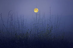 Full moon over the valley and grass Royalty Free Stock Photo