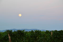 Full moon over vineyard royalty free stock image