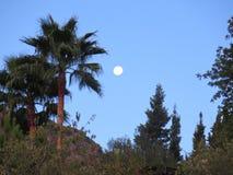 Full Moon and palm Tree Royalty Free Stock Photos