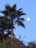 Full Moon and palm Tree Royalty Free Stock Images