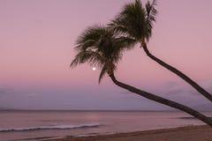 Moon and Palm Trees at Sunrise on Maui. A full moon and palm trees on a Maui beach at sunrise Stock Image