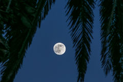 Full moon in paradise. A full summers moon in paradise Stock Image