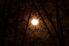 Full moon Royalty Free Stock Images