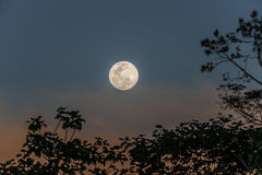 Full moon peruvian Amazon jungle Madre de Dios Per Stock Photos
