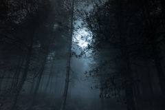 Full moon pinewood. Mysterious foggy full moon pinewood Royalty Free Stock Image