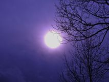 Full moon on a purple background. There are some trees at the front Stock Photo