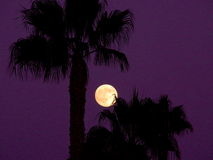 Full moon in a purple sky. A full moon framed by the silhouettes of palm trees against a dark purple sky Royalty Free Stock Photo