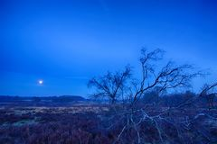 Blue moon rising royalty free stock photo