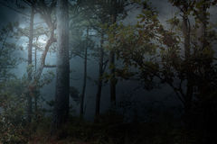 Full moon rises over a forest on a misty night Stock Image