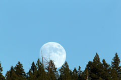 Full moon rising behind the trees in this spectacular time lapse Stock Photo