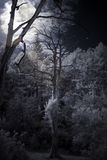 Moon rising over a forest. Full moon rising over a forest stock photos