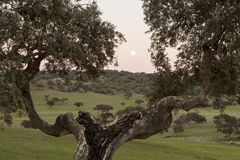 Full moon in a rural landscape of Castro, Verde, in the Alentejo. Portugal Stock Photos