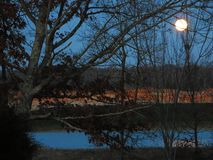 Full moon setting over lake. The full moon shines brightly through branches lain bare by winters cold. The moonlight reveals the reddish clay bank of a small Royalty Free Stock Photo
