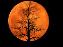 Full Moon with Dead Plant stock images