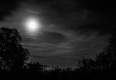 Full moon. A black-white night scene with a full moon and the trees in the fog royalty free stock image
