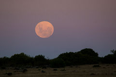 Full moon in the southern hemisphere Royalty Free Stock Images