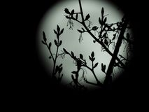Full moon in the starry night sky royalty free stock image