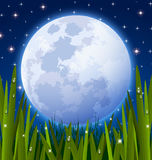 Full moon and grass meadow Royalty Free Stock Photos