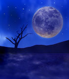 Full moon and tree in desert Stock Images