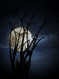 Full moon and tree Royalty Free Stock Image