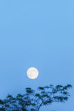 Full moon and tree, copy space, blue hour, evening sky Stock Photo
