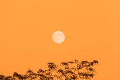 Full moon and tree, copy space, orange evening sky Stock Image