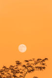 Full moon and tree, copy space, orange evening sky Stock Photo