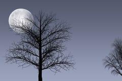 Full moon & trees Stock Photos