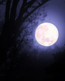 Full Moon among trees Royalty Free Stock Photos