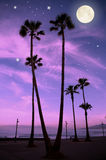 Full moon at the tropical night. Palm trees at the tropical night, Las Americas, Tenerife Royalty Free Stock Photography
