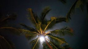 Full moon on a tropical night, palm trees on the night sky background. 1920x1080 stock footage