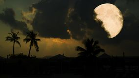 Full moon on a tropical night, palm trees on the night sky. Background stock video