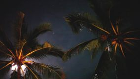 Full moon on a tropical night, palm trees on the night sky background. 1920x1080. Hd stock footage