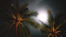Full moon on a tropical night, palm trees on the night sky background. 1920x1080. Hd stock video footage