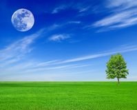 Full moon under the field Stock Photo
