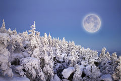 Full moon under snowy forest. Stock Images