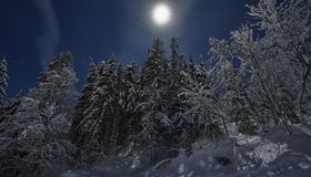 Full moon winter night fairytale, snow covered trees royalty free stock photo